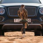 Сокол балобан и Bentley Bentayga