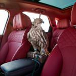 Соколн балобан в салоне Bentley Bentayga Falconry